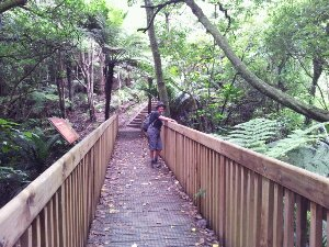 Otara Creek trail
