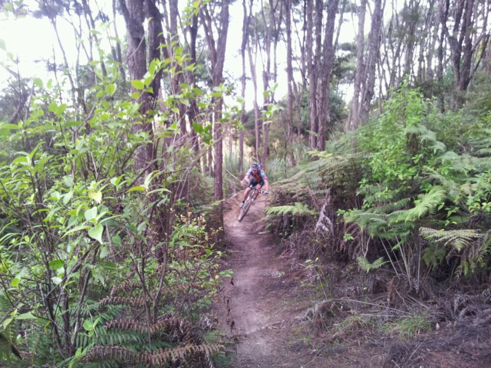 Auckland MTB Club ride the Royal Albany